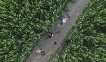 labirinto-dedalo-persone-che-camminano-nel-labirinto-di-mais