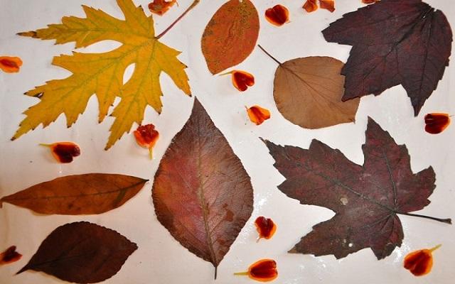 collage-di-foglie-secche