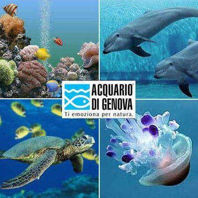 All 39 acquario di genova un carnevale nel profondo blu for Blu di metilene acquario